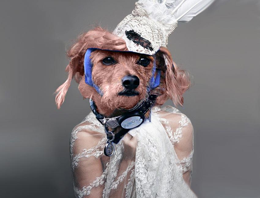Dog-in-desguise